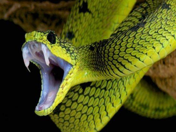 انسان بھی سانپوں کی طرح زہر پیدا کرسکتے ہیں، تحقیق