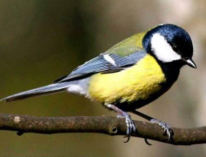 پرندوں کی بڑی آبادی اپنا رویہ اور برتاؤ تبدیل کرسکتی ہے