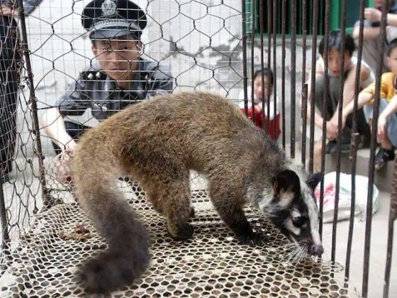 ڈبلیو ایچ او نے زندہ جانوروں سےکورونا جیسی مزید بیماریوں سے خبردار کردیا