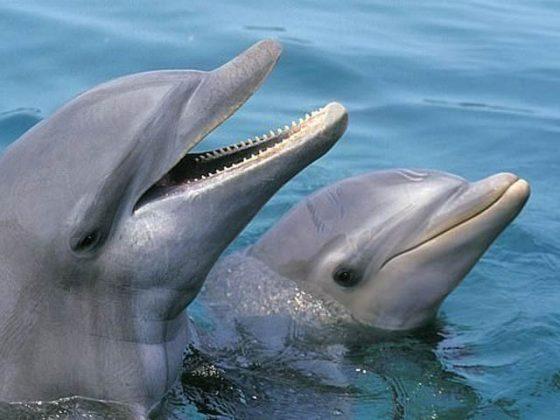 ڈولفن بھی مطلبی اور خود غرض ہوتی ہیں!