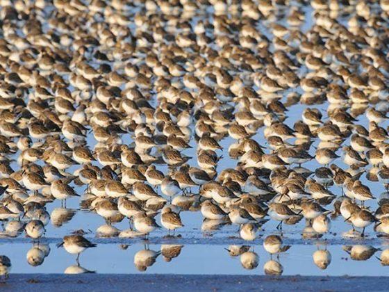 کرہ ارض پر پرندوں کی تعداد 50 ارب، لیکن چار انواع سرِفہرست