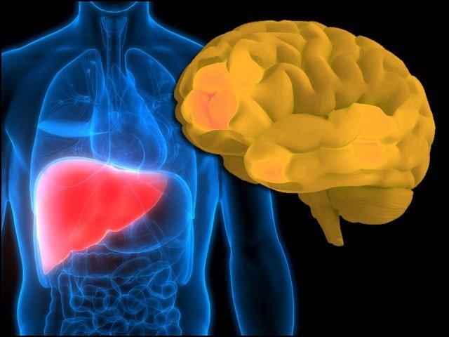 خطرناک دماغی بیماری کی ابتداء جگر سے ہوتی ہے، تحقیق