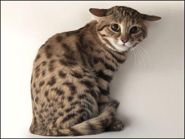 یہ بلی معصوم نہیں بلکہ سال میں 3,000 سے زائد شکار کرتی ہے!